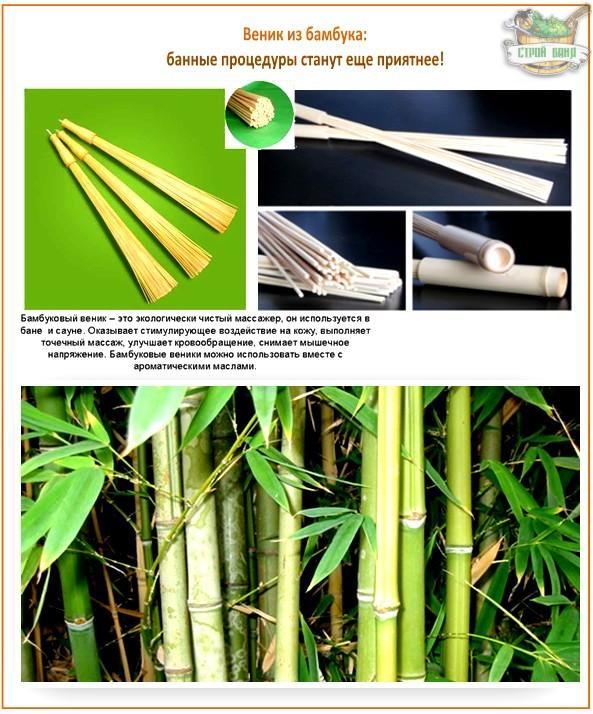 Чем полезен бамбук